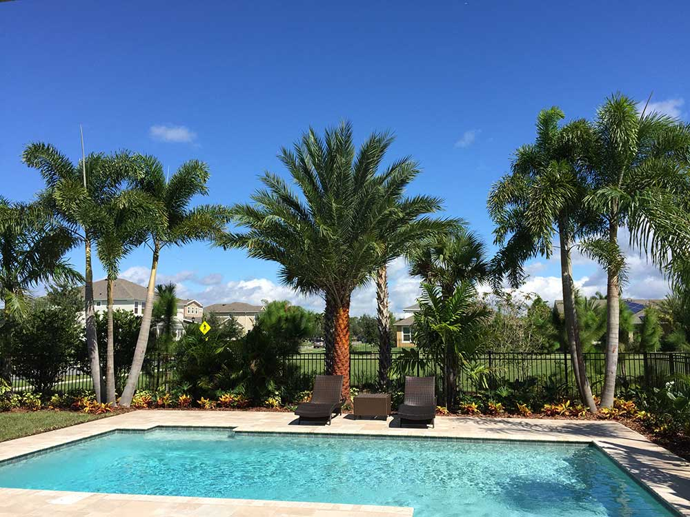 Frequently asked questions oasis palms landscaping for Best palm tree for swimming pool
