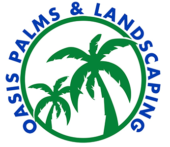 Tampa Palm Tree Sales And Installation Oasis Palms Landscaping